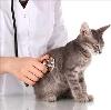 Ветеринарные клиники в Эртиле